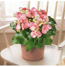 花とデート:今週はロマンティックな情報をおすすめ!